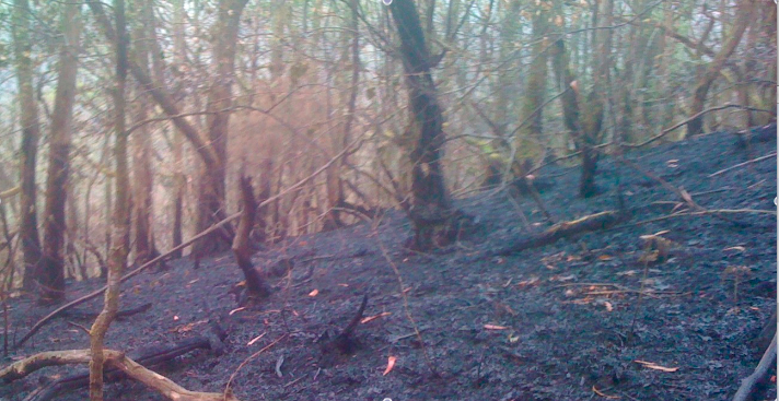 Fraga-quemada-2012
